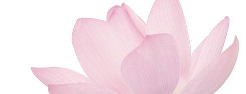 Pink%20Flower%20Petals_edited.jpg