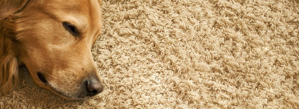 Pricing Carpet Cleaning Smart Shopper Bend