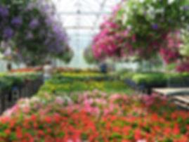 flowers leaves trees plants
