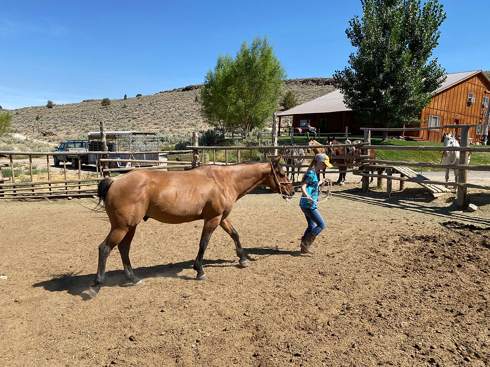 Steens Mountain Guest Ranch Horses Kiger Mustangs