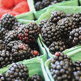 Oregon Frozen Marion Berries 1 lb