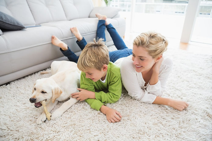 Contact Us Email Dalmatian Carpet Cleaning Bend Oregon