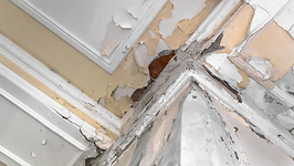 Mold Removal Mold Testing Mold Remediation Northern Ohio Wester PA Pennyslvania
