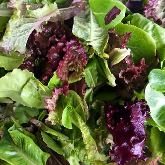 Salad Mix 12 oz