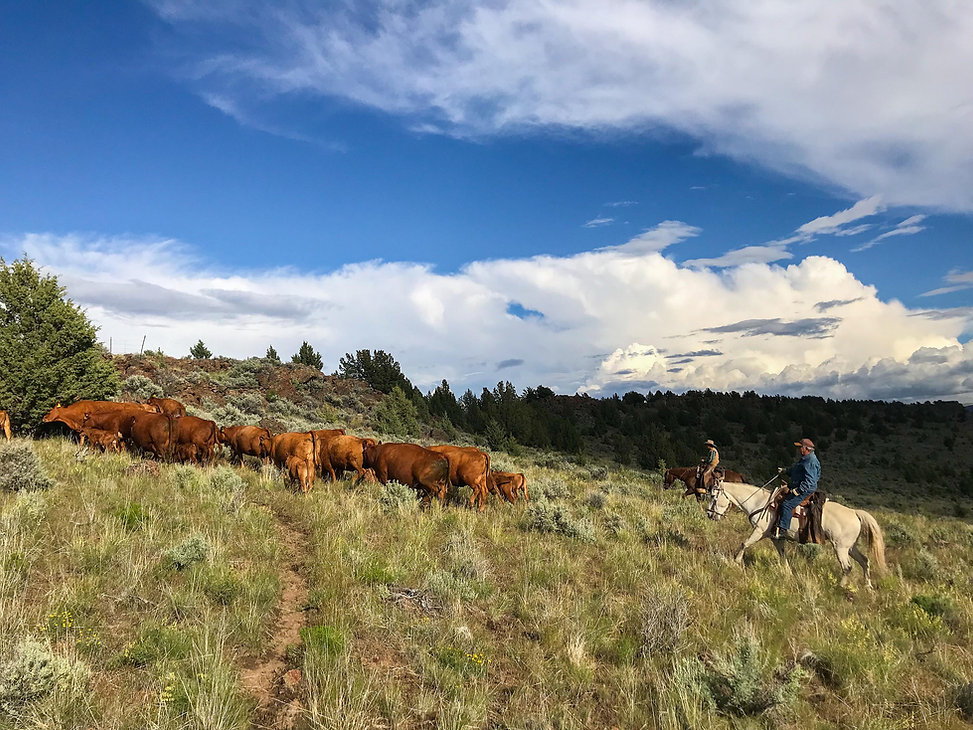 Spring Ranch Dude Ranch Experience Header Photo
