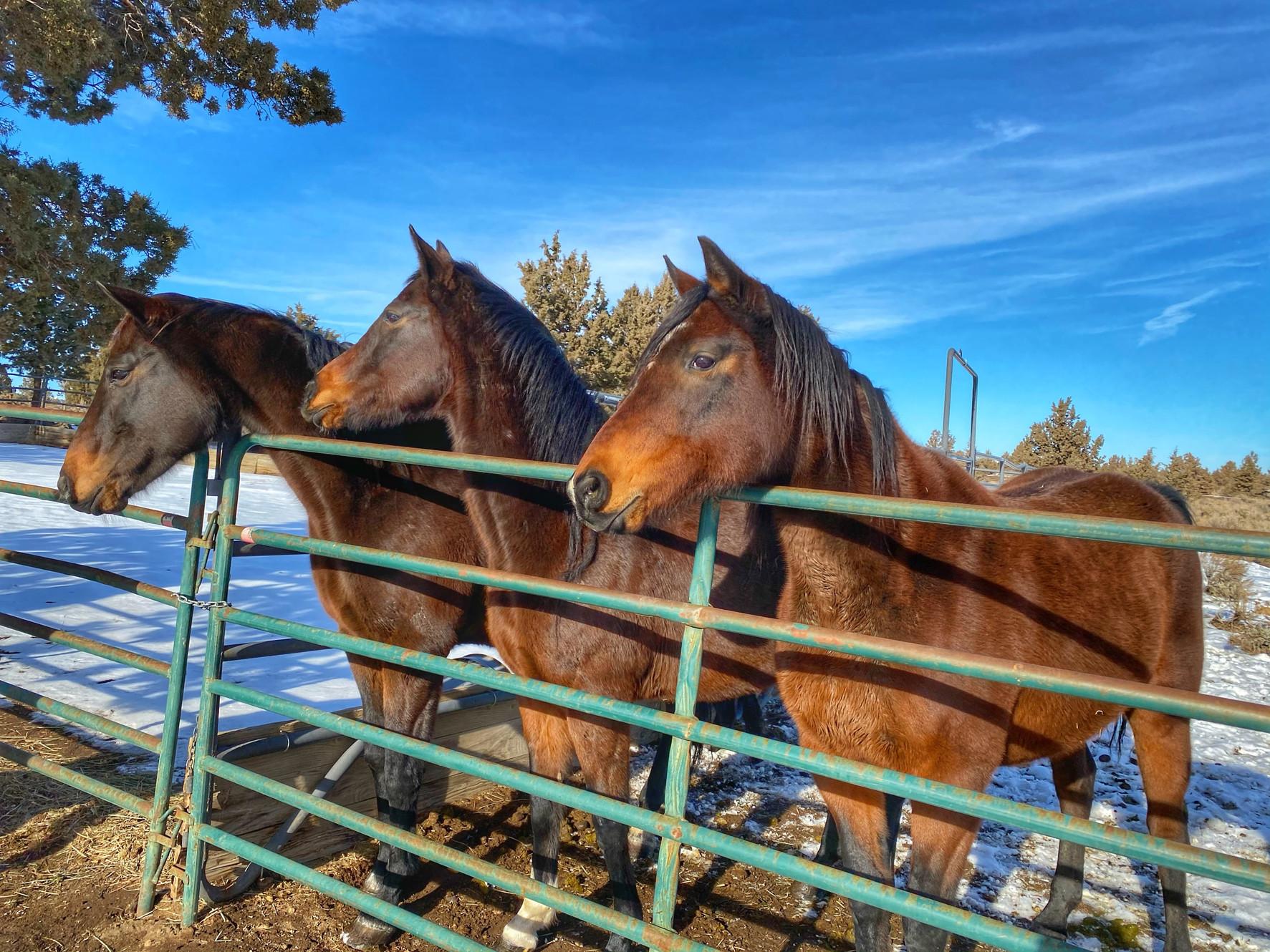 Adoption Equine Outreach And Horse Rescue Bend Oregon Equine Awarness