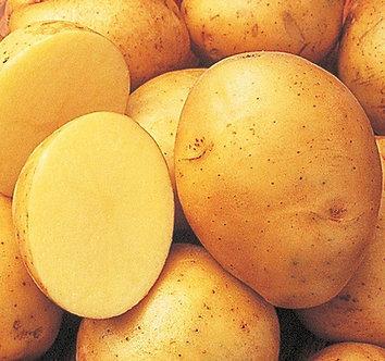 Yukon Gold Potatoes 5 lbs