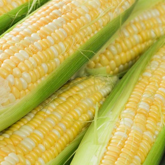 Northwest Corn on the cob