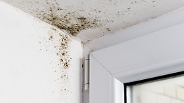 Mold Removal and Mold Testing Norther Ohio Western PA Cline Cleaning