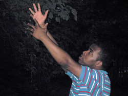 Reaching-for-the-stars