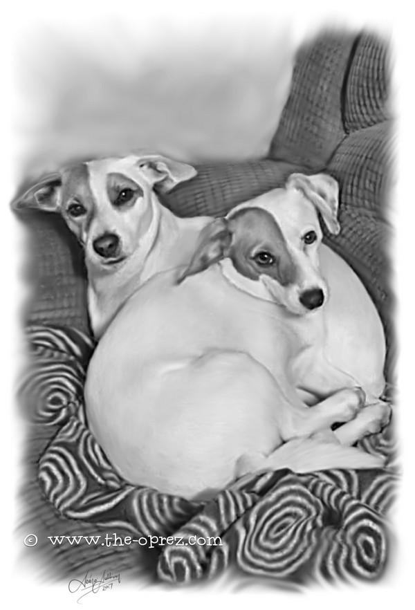 Dog Siblings Portrait