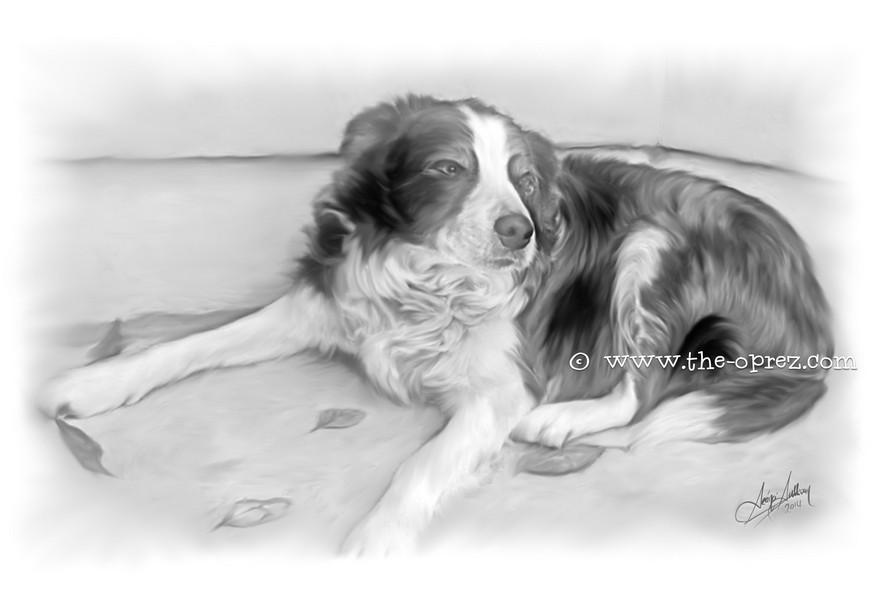 Old Shep Portrait