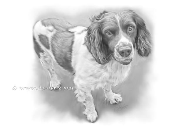 Loyal Dog Portrait
