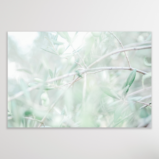 OLIVE TREE | Limited Edition
