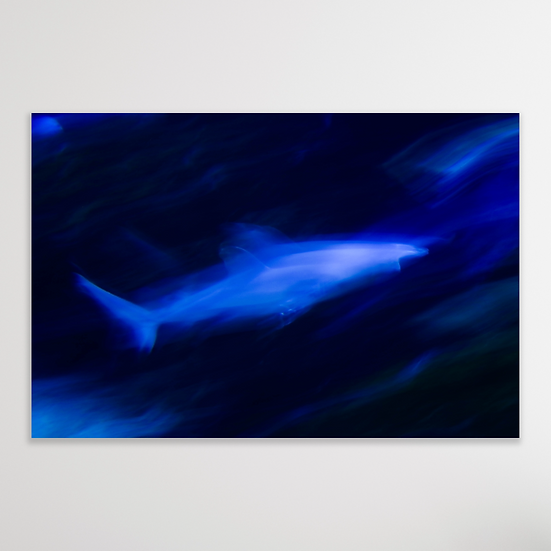 THE SHARK | Limited Edition