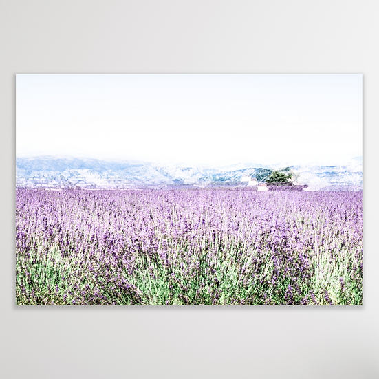 PROVENCE | Limited Edition