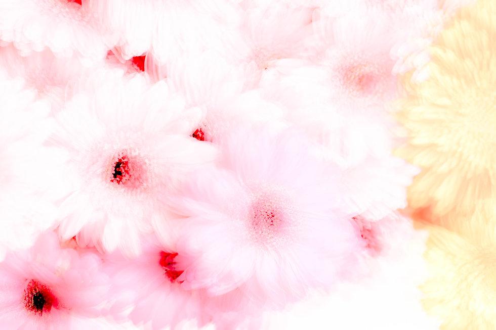 Flowers Final (1 of 1).jpg
