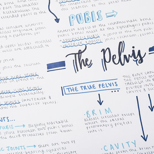 The Pelvis (2)
