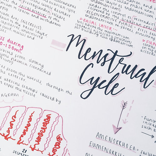 The Menstrual Cycle (2)