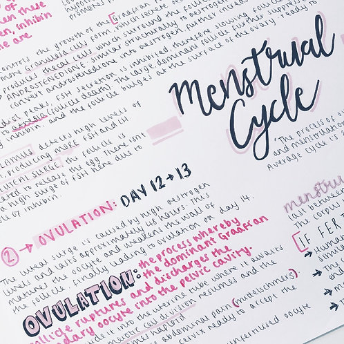 The Menstrual Cycle (1)
