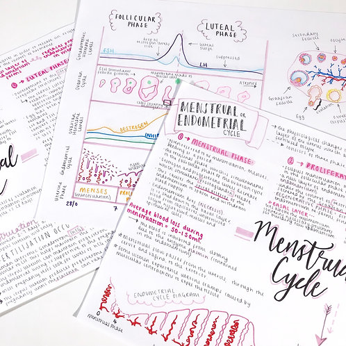 Menstrual Cycle Bundle