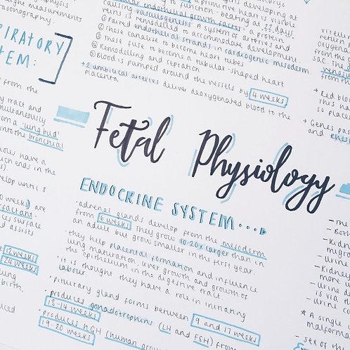 Fetal Physiology (2)