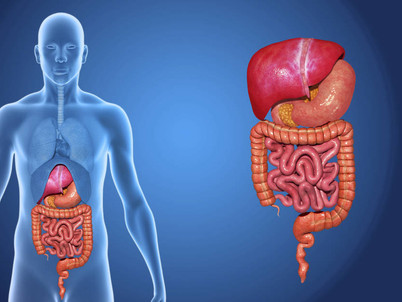 Digestion 101: this might be why you have digestive issues
