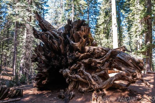 Yosemite National Park
