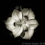 Quelques fleurs #26