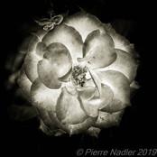 Quelques fleurs #05