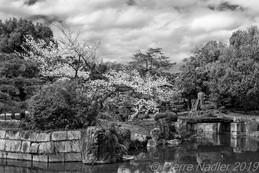 Nijo-jo castle - Kyoto-2