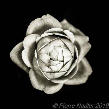 Quelques fleurs #02