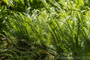Hoh Rain Forest-