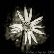 Quelques fleurs #69