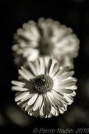 Quelques fleurs #14