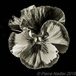 Quelques fleurs #09