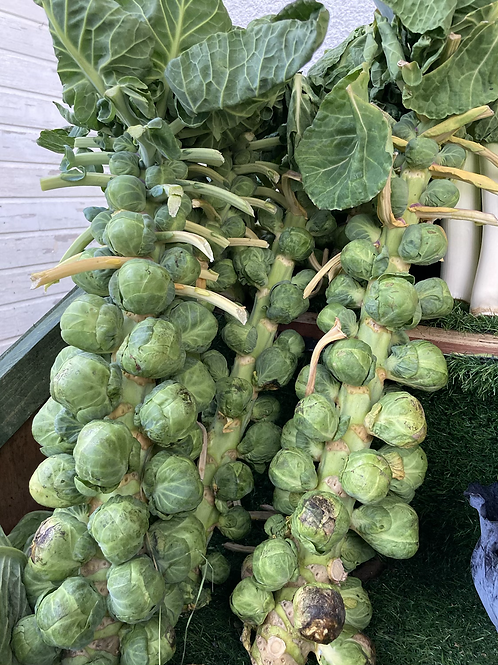 Stock of Bussel Sprouts