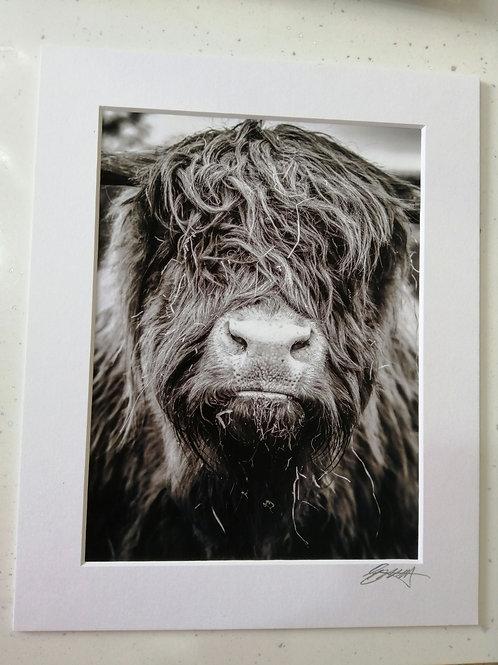 Highand Coo Print/Card