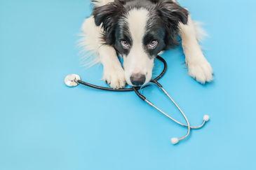 ART-Dog with stethoscope.jpeg