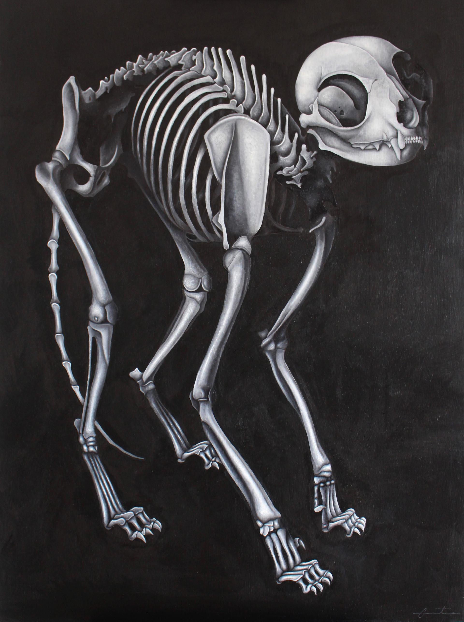 Cat Skeletal System 2019