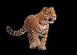 jaguar completo.png