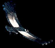 condor-volando_edited.png
