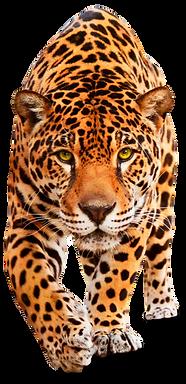 jaguar frente.png
