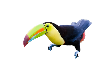 tucan listo.png