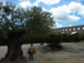 Oliveira e oleoduto romano em
