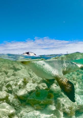 sunny seal.JPG