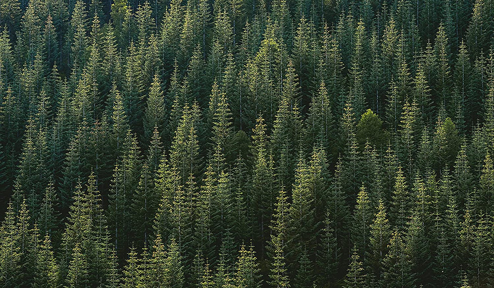 Alpine Woods.jpg
