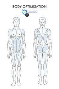 BBS Body Optimisation.png