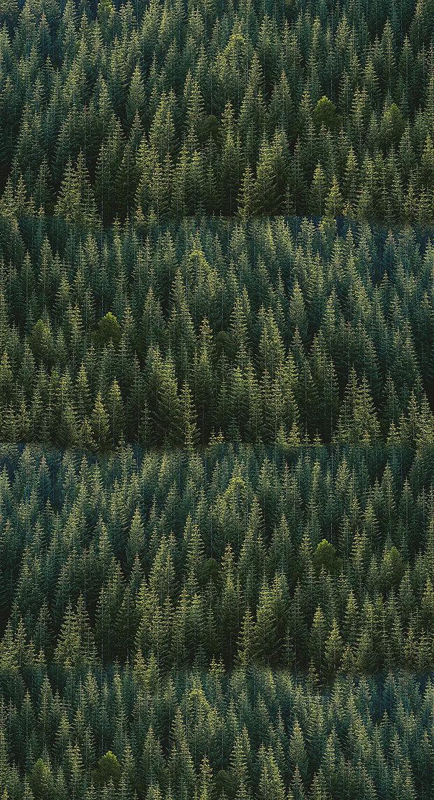 Alpine Woods Vertical.jpg