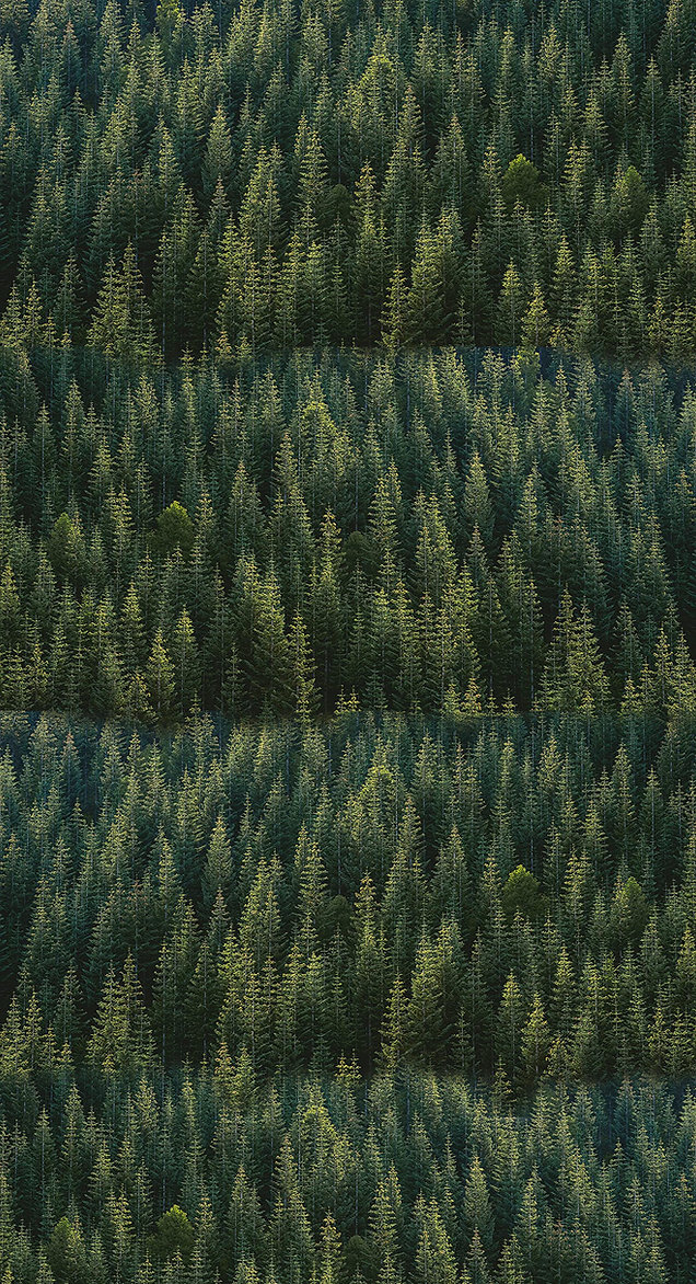 Alpine Woods Vertical.jpg